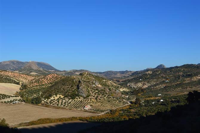 Via Verde de la Sierra, olive groves