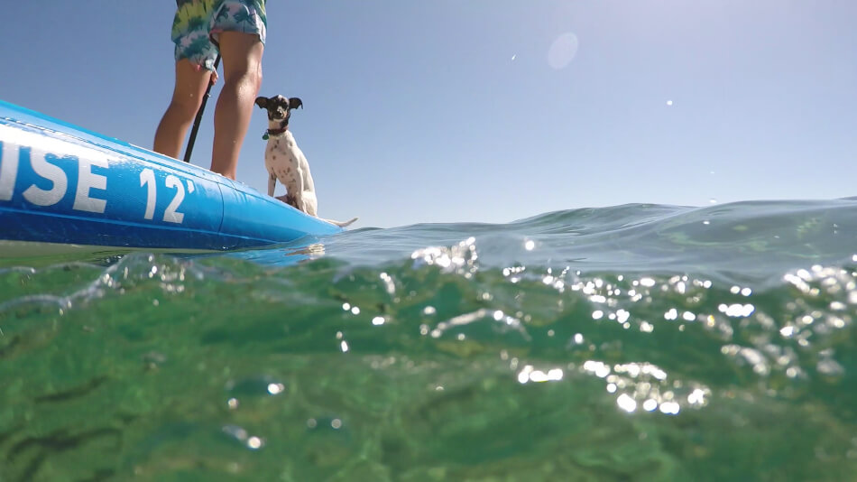 dog paddle boarding